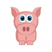 Isolated cute pig