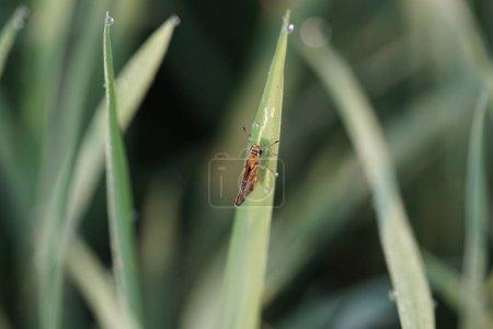 Photo pour Macro photo d'insectes et d'insectes dans la feuille verte. Macro bugs and insects world. Concept Nature au printemps . - image libre de droit