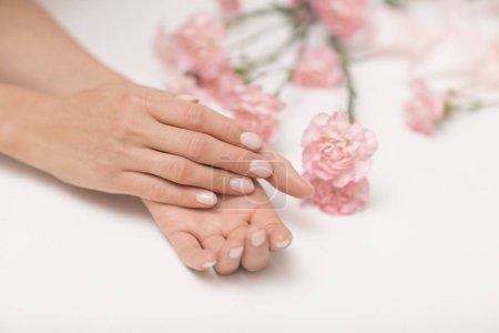 Photo pour Manucure. Belles et délicates mains sur fond blanc avec des fleurs roses . - image libre de droit