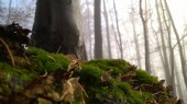 moss on the ground in the forest