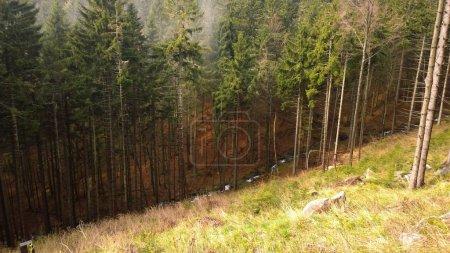 Photo pour Forêt magique dans la brume. Slovaquie - image libre de droit