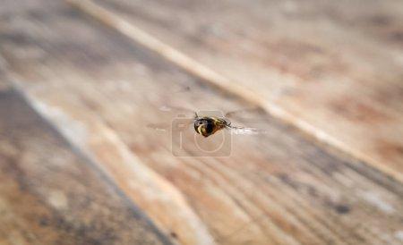 Photo pour Insecte volant dans une pièce vide - image libre de droit