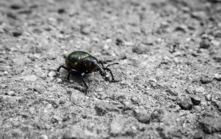 Photo pour Bug sur sol en pierre gros plan - image libre de droit