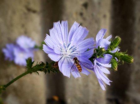 Photo pour Belles fleurs dans le jardin vert - image libre de droit