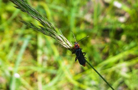 Photo pour Insecte gros plan sur fond vert - image libre de droit
