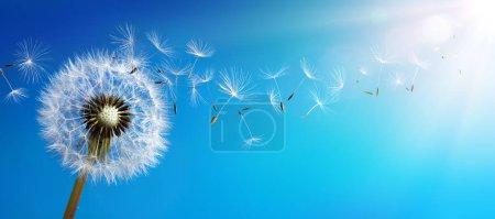 Photo pour Pissenlit avec graines soufflant ciel bleu - image libre de droit