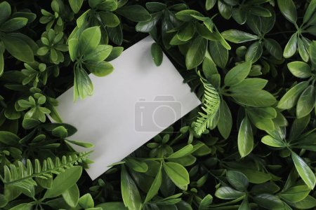 Photo for White blank card over green background - Royalty Free Image