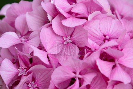 Photo pour Vue de gros plan des fleurs roses - image libre de droit