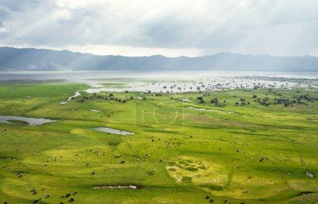 Photo pour Vue aérienne à beau paysage et troupeau de buffles noirs pâturages à la prairie. Parc national du lac Kerkini Grèce - image libre de droit