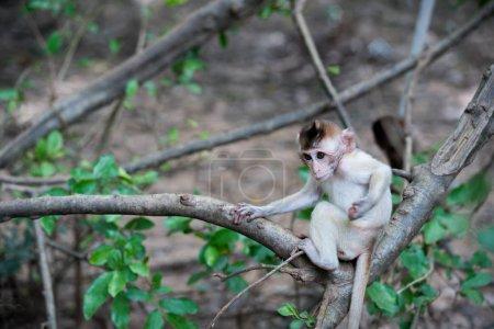 One baby monkey sitting on the tree...