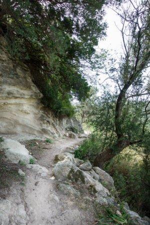 Photo pour Vue de la route de campagne au milieu des bois - image libre de droit