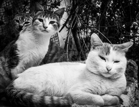 Photo pour Portrait de trois chats mignons - image libre de droit