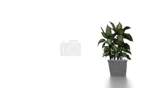 Photo pour Plantes vertes en fond blanc. Rendu 3d - image libre de droit