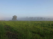 Beautiful sunny summer panorama of foggy meadow surrounded by trees at sunrise