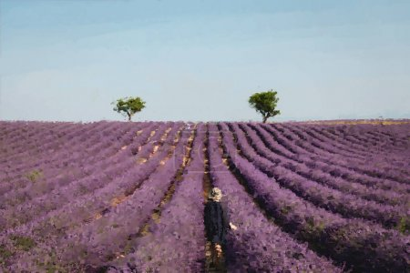 Photo for Painted lavander field with purple flowers near blue sky - Royalty Free Image