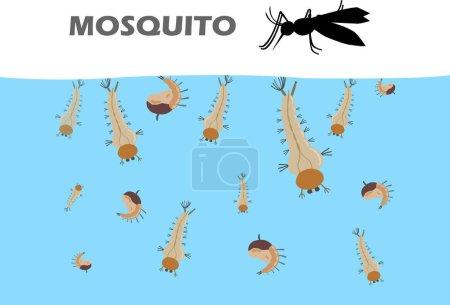 Illustration pour Les larves de moustiques sous l'eau avant de devenir adultes sont des moustiques qui remontent vivre sur terre. Larves de moustiques avant l'adulte . - image libre de droit