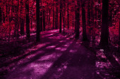 Halloween mysterious forest design with scary shadows. Night horror forest toned in red and purple with silhouette of trees and moonlight rays. Space for Halloween holiday text.