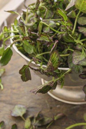 fresh watercress in colander