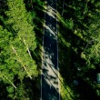 Aerial view of a road in green summer pine forest ...