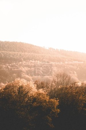 Photo pour Au coucher du soleil, une belle photo d'arbres bruns et de verdure sur les collines et les montagnes. - image libre de droit