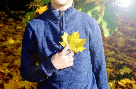 Photo for A boy in an autumn Park covers his face with a maple leaf. A child walks in the Park. Cute boy playing with maple leaves in the open air. - Royalty Free Image