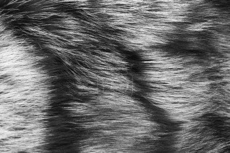 Photo pour Fourrure naturelle pour la texture ou l'arrière-plan. Luxe et vêtements élégants de moelleux. Concept de mode caractère. Teints en manteau de fourrure de couleur marron et grise, gros plan. - image libre de droit