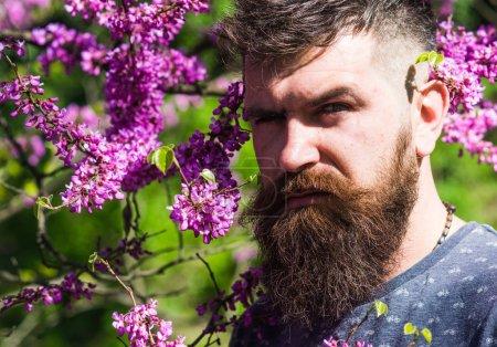 Photo pour Homme avec barbe et moustache sur le visage strict près des fleurs par une journée ensoleillée. Homme barbu avec coupe de cheveux fraîche posant avec floraison de judas arbre. Hipster apprécie le printemps près de la fleur violette. Concept de parfumerie . - image libre de droit