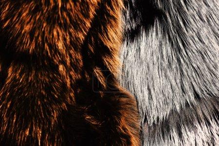 Photo pour Teints en manteaux de fourrure de couleur marron et grise, bouchent. Naturel ours et le loup de fourrures pour la texture ou l'arrière-plan. Concept de mode caractère. Luxe et vêtements élégants de moelleux. - image libre de droit
