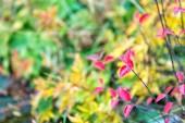 """Постер, картина, фотообои """"Красный и красочные листья филиал закрыть вверх. Осенние цвета листьев явление затрагивает обычно зеленый листья приобретают различные оттенки красного. Осенний сезон. Красочные осенние листья. Осенняя листва концепция"""""""