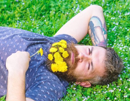 Photo pour Homme à la barbe sur le visage calme profiter de la nature. Homme barbu avec des fleurs de pissenlit reposent sur prairie, fond d'herbe. Hipster avec bouquet de pissenlits à la barbe relaxant. S'unir au concept de nature . - image libre de droit