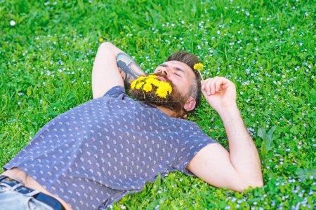 Photo pour Homme à la barbe sur le visage calme profiter de la nature. Homme barbu avec des fleurs de pissenlit reposent sur prairie, fond d'herbe. Unissez-vous au concept de la nature. Hipster avec bouquet de pissenlits à la barbe relaxant . - image libre de droit