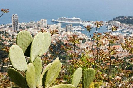 Photo pour Vue des cactus de La Turbie au Port Hercule à Monaco avec un bateau de croisière géant et des yachts de luxe . - image libre de droit