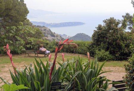 Photo pour Une Beschorneria yuccoides fleurie avec vue de La Turbie et Trophée des Alpes, Côte d'Azur, à la péninsule Roquebrune-Cap-Martin sur la mer Méditerranée . - image libre de droit
