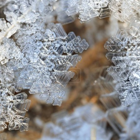 Photo for Close-up view of transparent snow crystals - Royalty Free Image