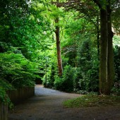 quiet cobbled street with trees and bushes in Herford Germany