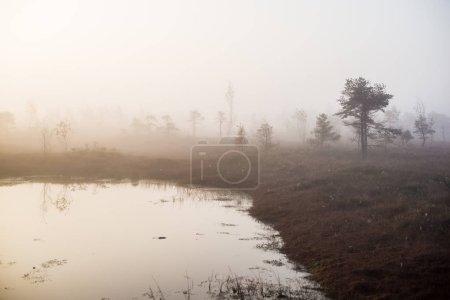 Photo pour Paysage d'automne. Brouillard matinal, marais et forêt en arrière-plan. Kemeri, Lettonie - image libre de droit