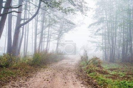 Photo pour Foggy matin. Un paysage forestier d'automne. Un chemin de terre à travers les arbres, Lettonie - image libre de droit