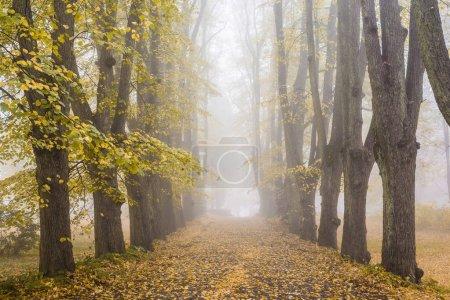 Photo pour Un brouillard matinal d'automne. Vue sur la promenade dans le parc, les vieux arbres et les feuilles dorées. Riga, Lettonie - image libre de droit