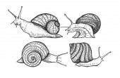 Vector snails isolated on a white background Graphic illustration Four snails with shells Set