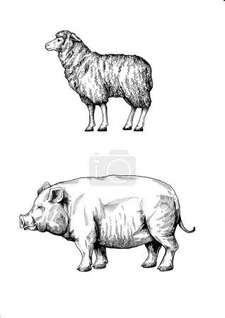 Nutztiere. Vintage-Retro-Stil klassische Illustration für Steak House, Speisekarte, Paket