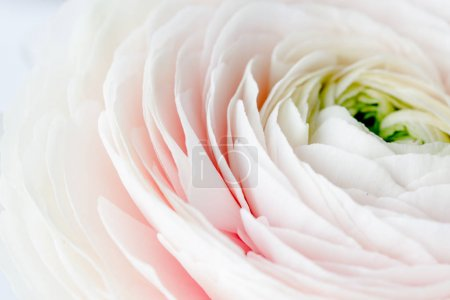 Photo for Macro shot of white flower petals - Royalty Free Image