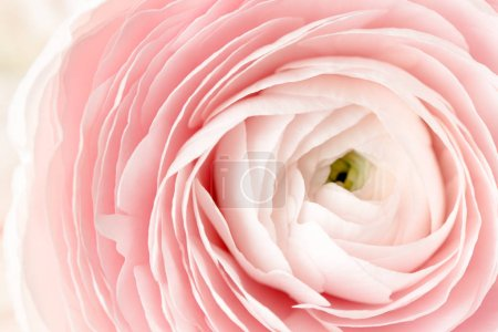 Photo for Macro shot of pink flower petals - Royalty Free Image