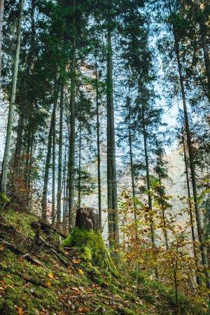 Photo pour Riverside dans les couleurs de l'automne, le matin vif dans la forêt colorée avec le soleil sur les arbres. Le paysage de la nature avec la lumière du soleil, forêt d'automne . - image libre de droit
