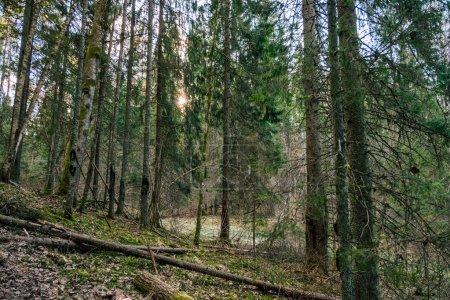 Photo pour Belle forêt, nature. Voyages - image libre de droit