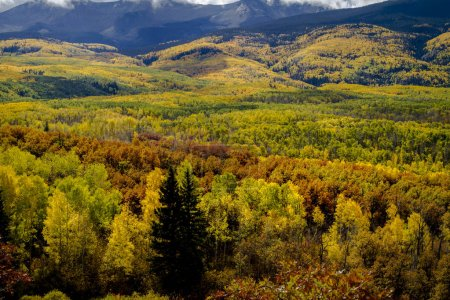 Photo pour Vallée de montagne remplie de peupliers faux-trembles jaunes et verts et de chênes-broussailles orange - image libre de droit