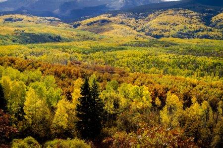 Photo pour Vallée de montagne remplie de peupliers faux-trembles jaunes et verts et de chênes-broussailles orangés l'après-midi ensoleillé d'automne - image libre de droit