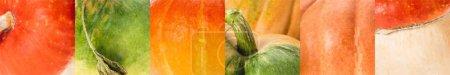 Photo pour Collage de citrouille naturelle mûre orange et verte - image libre de droit