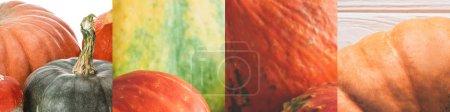 Photo for Collage of ripe orange natural fresh pumpkin - Royalty Free Image