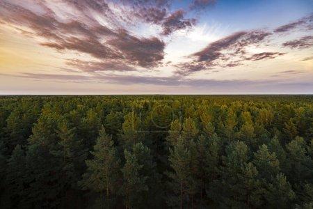 Photo pour Un beau ciel coloré au coucher du soleil et une forêt verte sur le fond. - image libre de droit