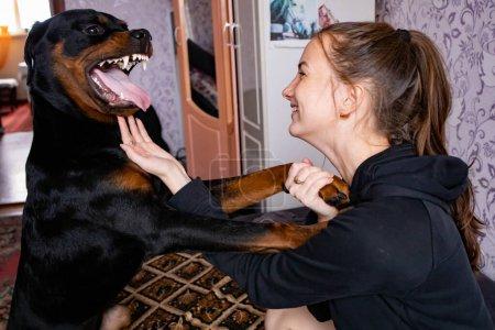 Foto de La chica juega en casa con un perro grande. El perro está enojado con el dueño. . - Imagen libre de derechos